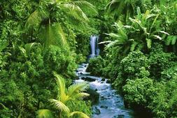 Rain Forest Photo Art Print Poster 36x24 inch